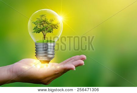 The Forest And The Trees Are In The Light. Concepts Of Environmental Conservation And Global Warming