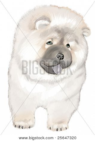 super cute chow chow dog
