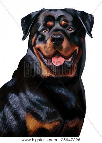 portrait of pure-blooded black Rottweiler dog