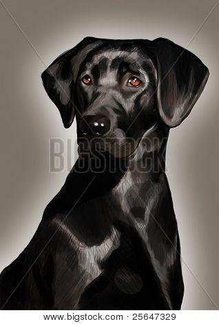 portrait of pure-blooded black labrador dog