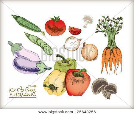 Organic vegetables set. Very detailed hand drawn.
