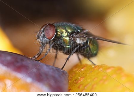 Green Fly On Fruit Slices Feeding, Macro Close-up