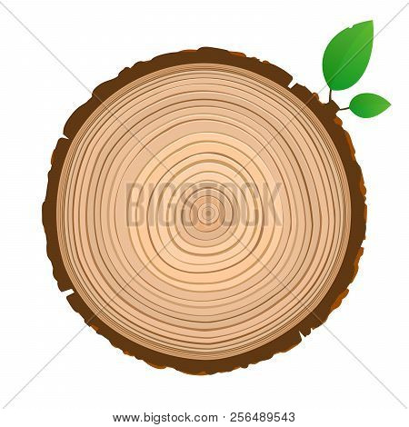Wood Sign Icon Cross Section Of The Trunk With Tree Rings Vector