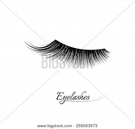Eyelash Extension. Beautiful Black Long Eyelashes. Closed Eye . False Beauty Cilia. Mascara Natural