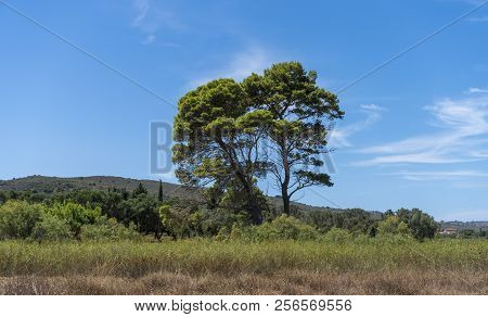 Mediterranean Landscape With Tree And Blue Sky