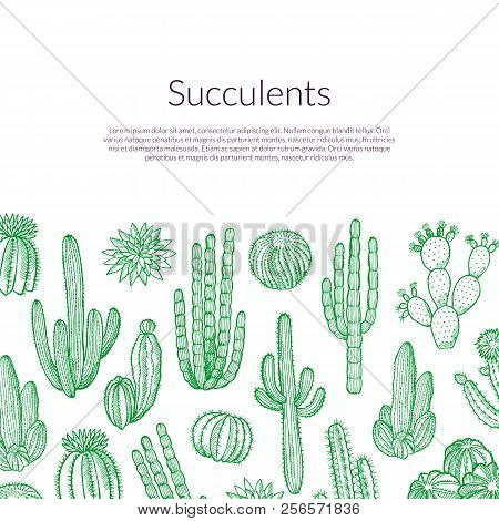 Vector Hand Drawn Wild Cacti Plants Background With Place For Text Illustration. Cactus Plant Wild,