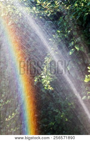 Beautiful, Bright Rainbow. Woman Gardener Watering Plants In Summer Garden. Close Up Of Beautiful Re