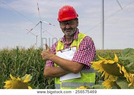 Smiling Engineer Wearing Red Safety Helmet Standing In Sunflower Field, Showing Thumb Up At Wind Far