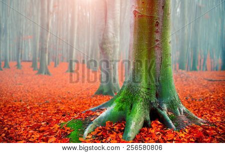 Autumn landscape, Fall scene. Beautiful Autumnal park with colorful bright red leaves and old dark trees. Beauty nature scene. Trees and Leaves, foggy forest, fantasy landscape