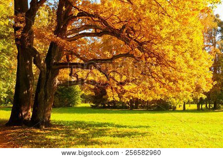 Autumn picturesque landscape. Autumn trees with yellowed foliage in sunny October park lit by sunshine. Colorful autumn landscape in bright tones. Beautiful autumn landscape scene