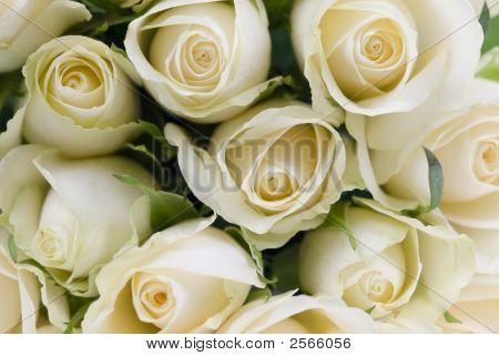 Blumenstrauß aus Weiß-Rosen