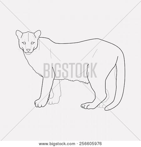Puma Icon Line Element. Vector Illustration Of Puma Icon Line Isolated On Clean Background For Your