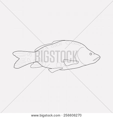 Carp Icon Line Element. Vector Illustration Of Carp Icon Line Isolated On Clean Background For Your