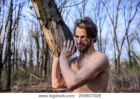 Masculinity concept. Man brutal strong attractive guy collecting wood in forest. Man brutal sexy lumberjack carry big log in forest. Lumberjack or woodman sexy naked muscular torso gathering wood poster