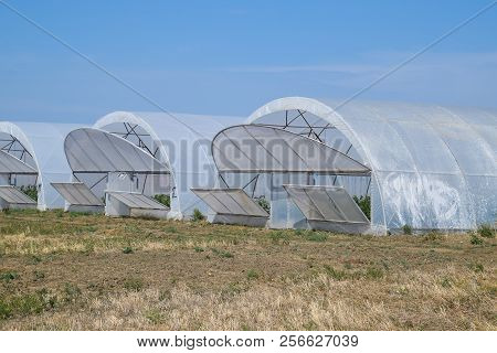 A Group Of Greenhouses For Growing Tomatoes And Cucumbers. Growing Tomatoes In The Greenhouse. Seedl