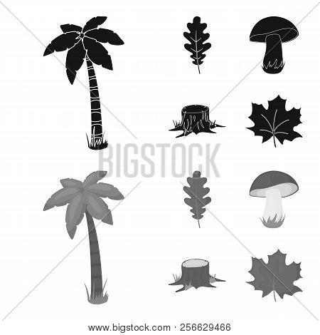 Oak Leaf, Mushroom, Stump, Maple Leaf.forest Set Collection Icons In Black, Monochrome Style Vector