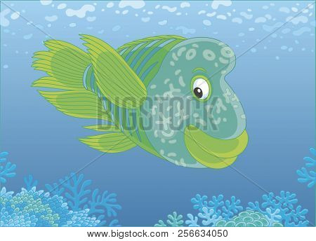 Large Humphead Wrasse Swimming Over A Coral Reef In Blue Water Of A Tropical Sea, Vector Illustratio