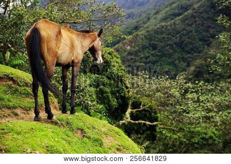 Horse in Cordiliera Central, Cocora Valley, Colombia, South America