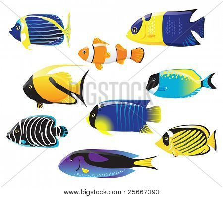 set of sea fishes