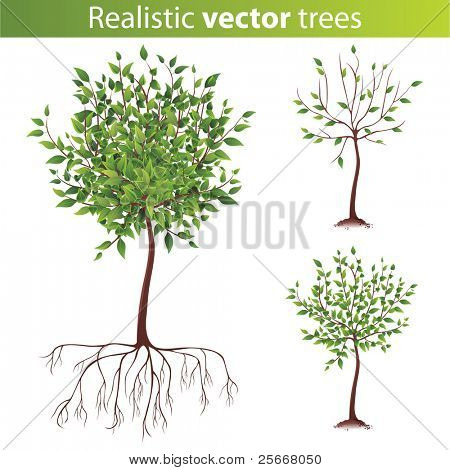 realistic green tree with roots
