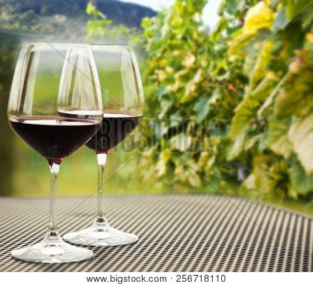glasses of red wine and ripe grapes on the vine - autumn background