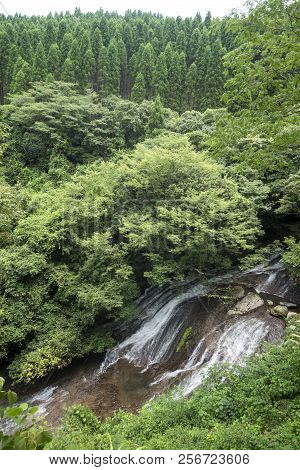 White Waterfall Falling Over Rockmass Slope Between Broad Leaved Forest Under Conifer Forest In Kuma