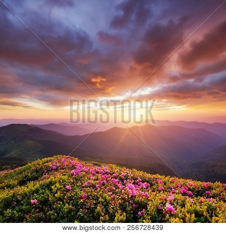 Mountains During Flowers Blossom And Sunrise. Flowers On The Mountain Hills. Beautiful Natural Lands