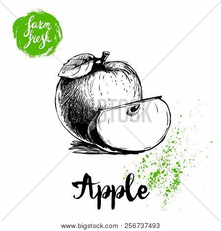 Hand Drawn Sketch Apple With Leaf And Cut Of Apple Poster. Vitamin And Healthy Farm Fresh Fruit Vect