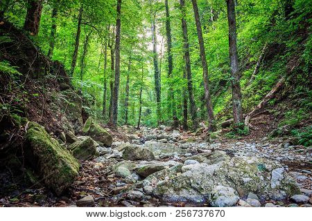 Mountain River Kaverze Flowing Through The Green Forest, Russia