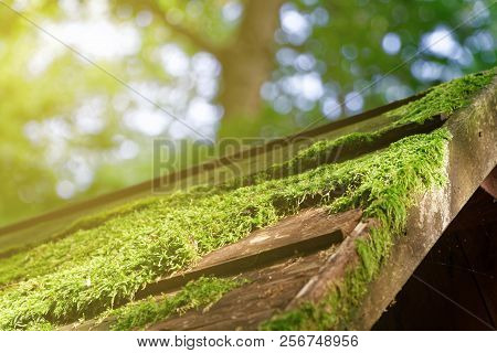 Moss On Wooden Roof, Tree Bark With Green Moss. Selective Focus
