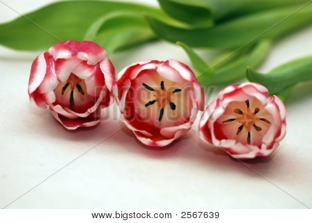 Another 3 Pink Flowers