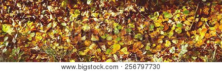 Autumn Leaves En Various Warm Colors In The Sun On The Forest Floor In The Fall