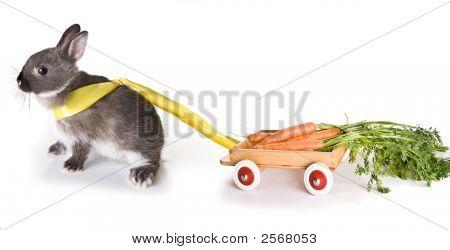 Carrot Cart