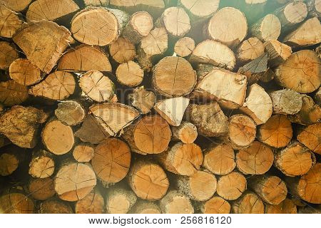 Pile Of Cut Tree Wood As Abstract Natural Background