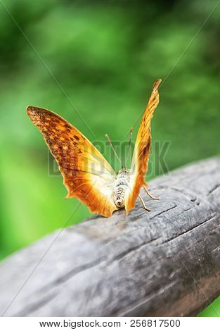 Beautiful Golden Butterfly On Green Background In Nature