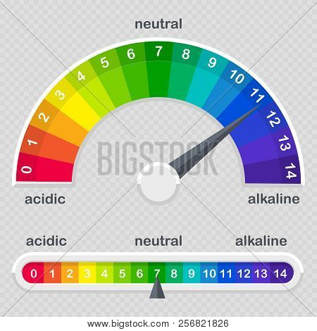 Ph Value Scale Meter For Acid And Alkaline Solutions Vector Isolated On Transparent Background Illus