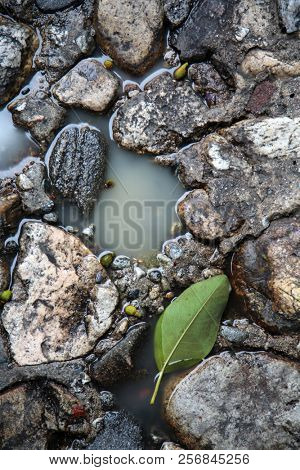 Stone Floor. Color Muted. Old Stone Floor with water and green tree leaf. background and textures. wet floor. wet rocks.