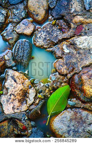 Stone Floor. Color Inhansed. Old Stone Floor with water and green tree leaf. background and textures. wet floor. wet rocks.