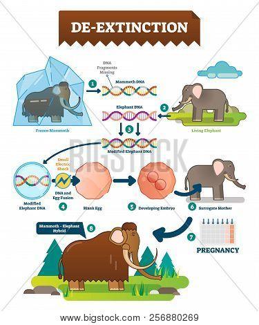De-extinction Infographic Vector Illustration. Detailed Process Explanation Scheme With Dna Modifica