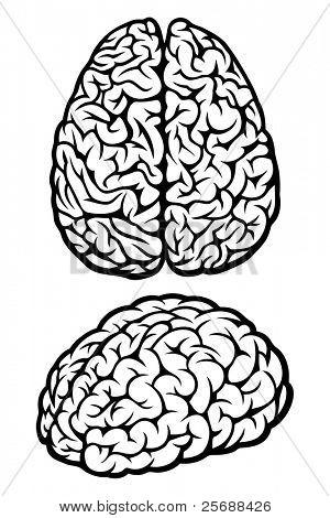 Brain. Vector Illustration
