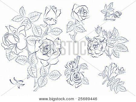 Sketch of roses