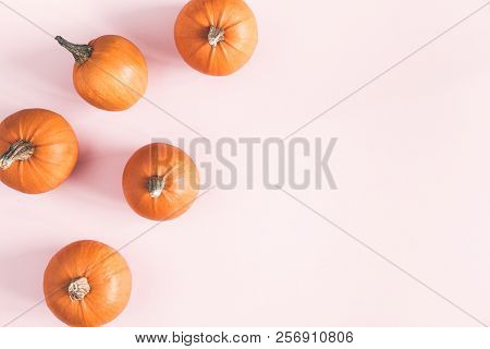 Autumn Composition. Pumpkins On Pastel Pink Background. Autumn, Fall, Halloween Concept. Flat Lay, T