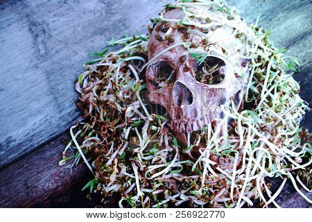 Death skull human with big snail crawl on face and rot bean sprouts some foul smelly. concept halloween day. poster