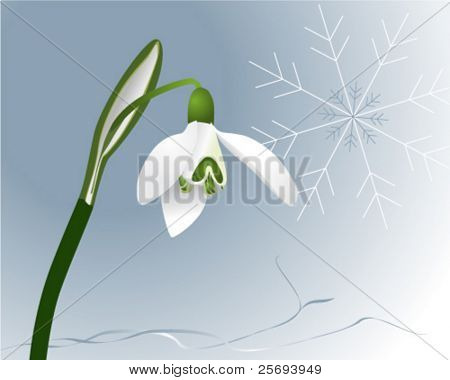 Vector illustration of a snowdrop