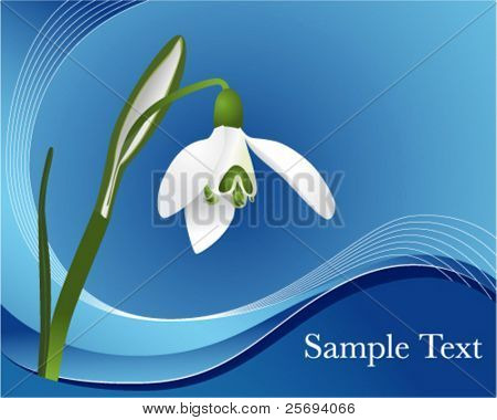 Vector illustration of a first snowdrop