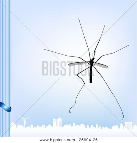 Vector illustration of a Crane fly .