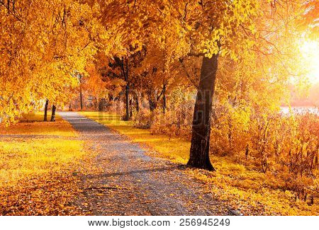 Fall trees along the park alley in sunny weather. Fall landscape - fall alley with colorful fall trees and fallen fall leaves covering the ground