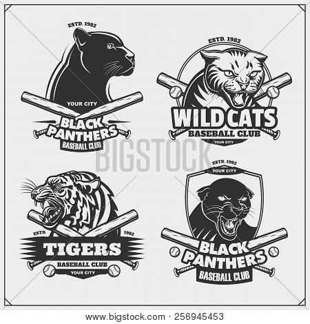Set Of Baseball Emblems, Badges And Labels With Tiger, Panther And Wildcat.