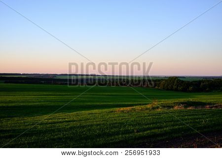 Landscape, Sunny Dawn In A Sowed Field. Pink Dawn On A Green Field. In The Distance You Can See The