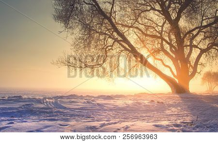 Winter Landscape With Bright Warm Sunlight. Christmas Background Of Nature On Sunset With Vibrant Su